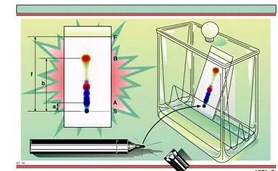 Kromatografi-lapis-tipis