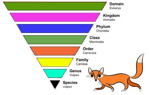tingkatan-taksonomi