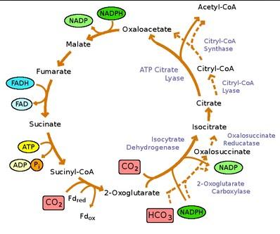 contoh anaerob
