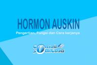 Hormon Auskin