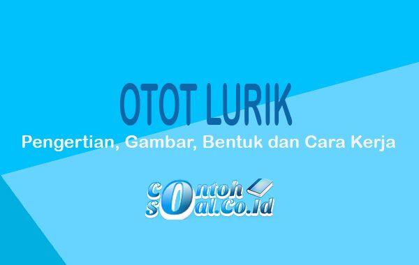 Otot Lurik