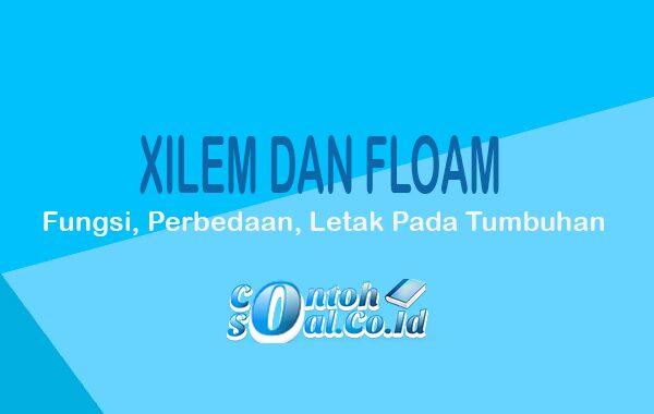 Xilem dan Floem