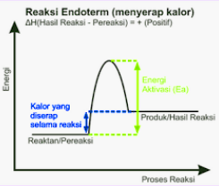 Diagram Endoterm