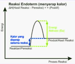 Diagram Endoterm