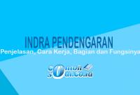 Indra Pendengaran