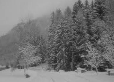 musim dingin bioma taiga
