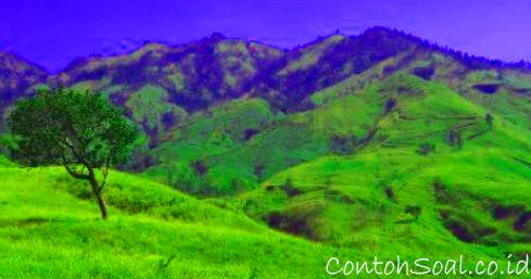 Savana Gunung Rinjani