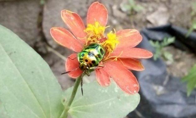 Bunga-dan-kumbang