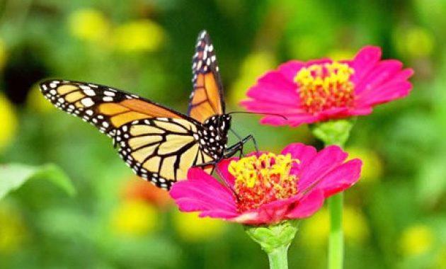 Bunga-dengan-kupu-kupu