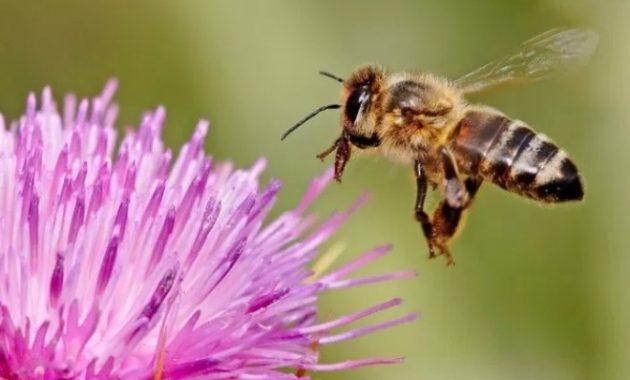 Bunga-dengan-lebah