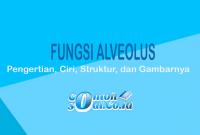 Fungsi-Alveolus