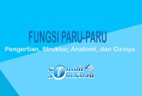 Fungsi-Paru-Paru