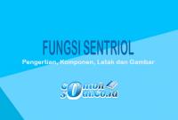 Fungsi-Sentriol