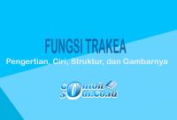 Fungsi Trakea