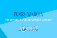 Fungsi-Vakuola