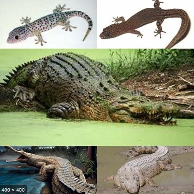 Kelas Reptil