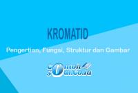 Kromatid