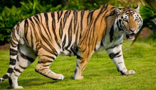 Fauna Asiatis
