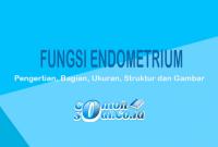 Fungsi Endometrium