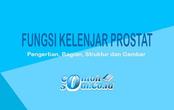 Fungsi Kelenjar Prostat