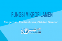 Fungsi Mikrofilamen