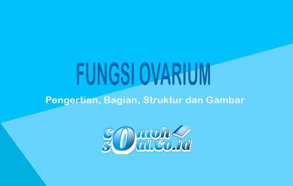 Fungsi Ovarium