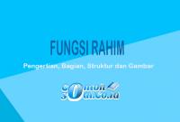 Fungsi Rahim