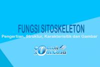 Fungsi Sitoskeleton