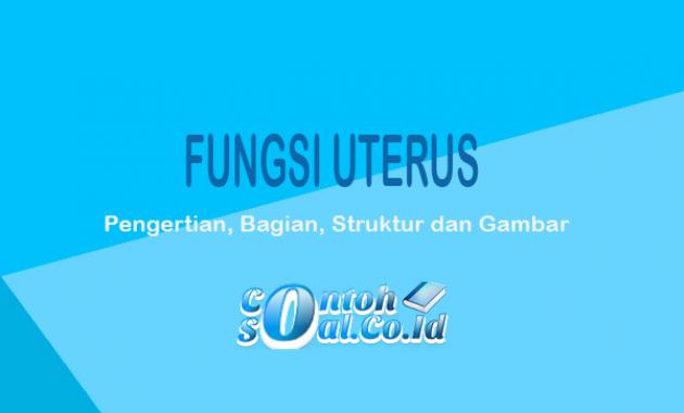 Fungsi Uterus