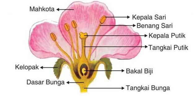 Bagian Bagian Bunga