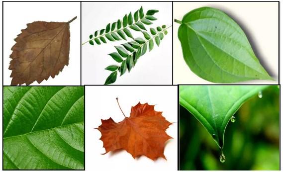 gambar daun