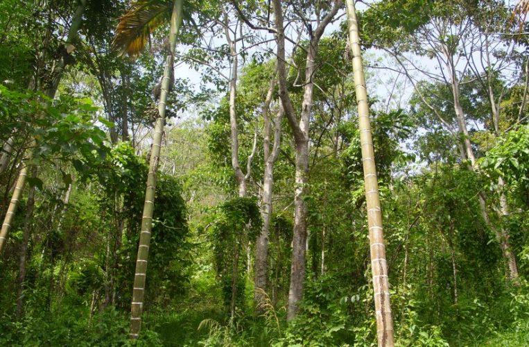 SDA hutan