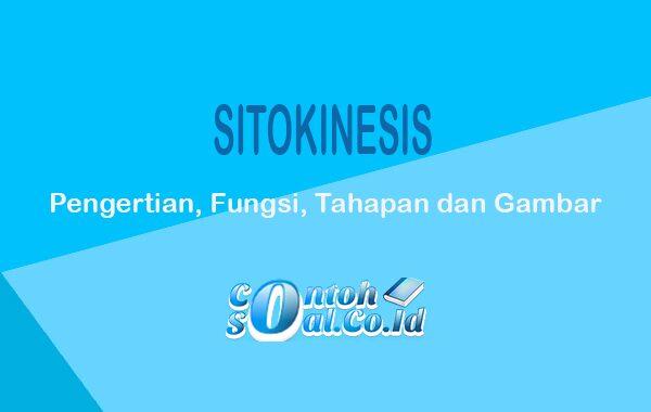 Sitokinesis