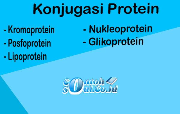 Konjugasi Protein