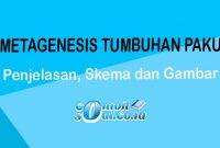 metagenesis tumbuhan paku
