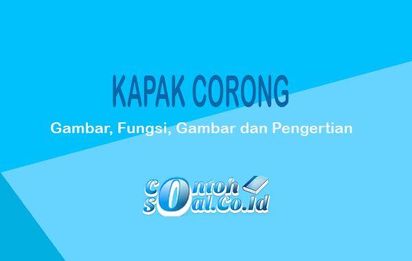 Kapak Corong