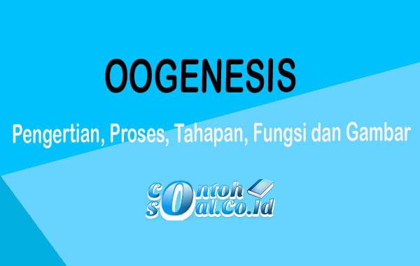 Oogenesis