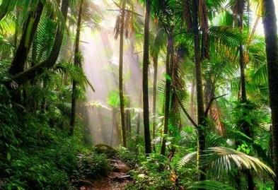 Ekosistem Buatan