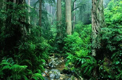 Ekosistem Alami