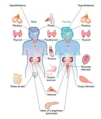 Gambar Hormon FSH