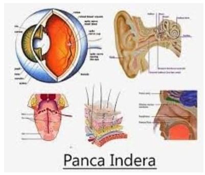 Gambar Sistem Panca Indera