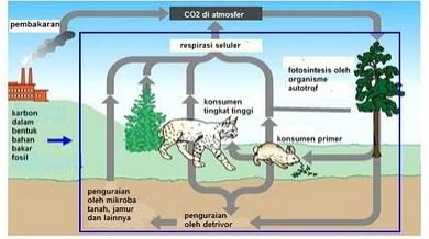 Gambar Daur Karbon Dioksida