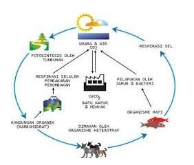 GamabarContoh Siklus Daur Biogeokimia