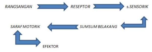 Gambar Sistematis Gerak Refleks
