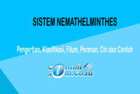 Sistem Nemathelminthes