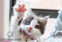 Kode Alam Kucing
