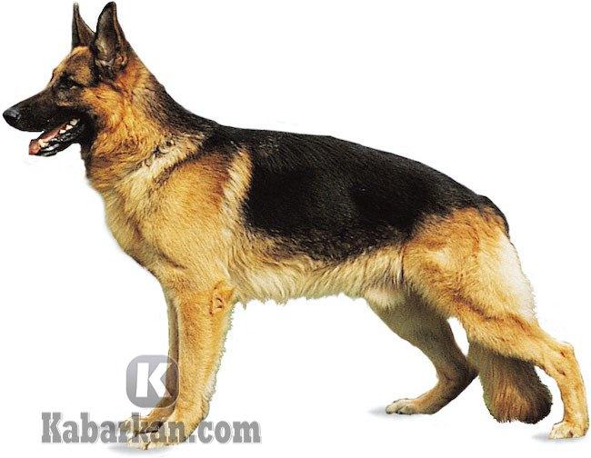 Tafsir bertemu anjing kotor dan kurus