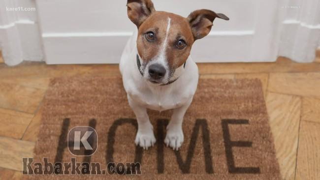 Tafsir melihat anjing masuk rumah