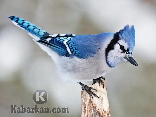 Tafsir melihat burung berbulu indah
