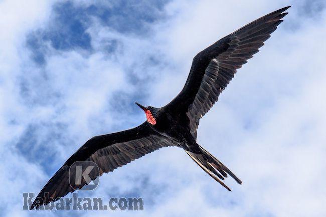 Tafsir melihat burung terbang